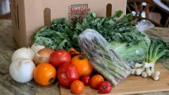 Fresh, Local Produce Available Now