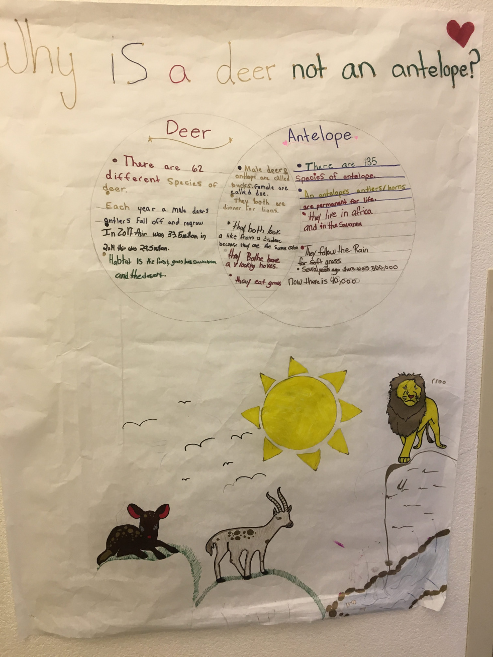 Numa 5th graders make poster presentations