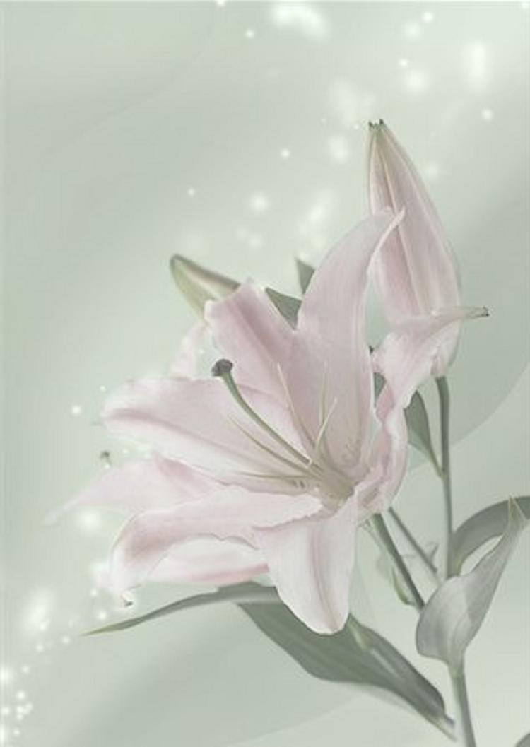 Obituary -- Herbert William Plants
