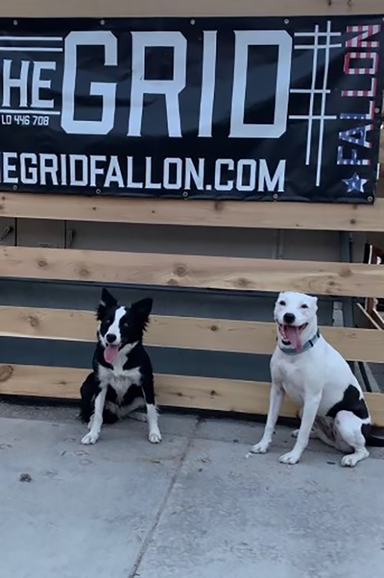 Who Let the Dogs In? The Grid, on Their New Pet Patio