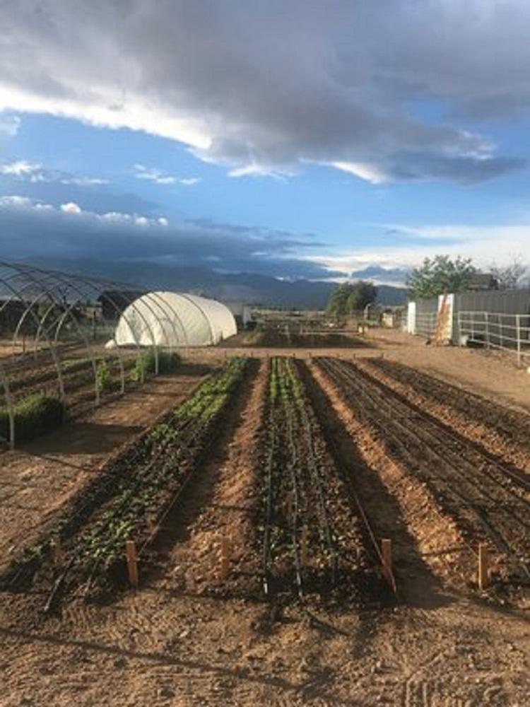 Yellow Petal Flower Farm – New Agritourism Facility